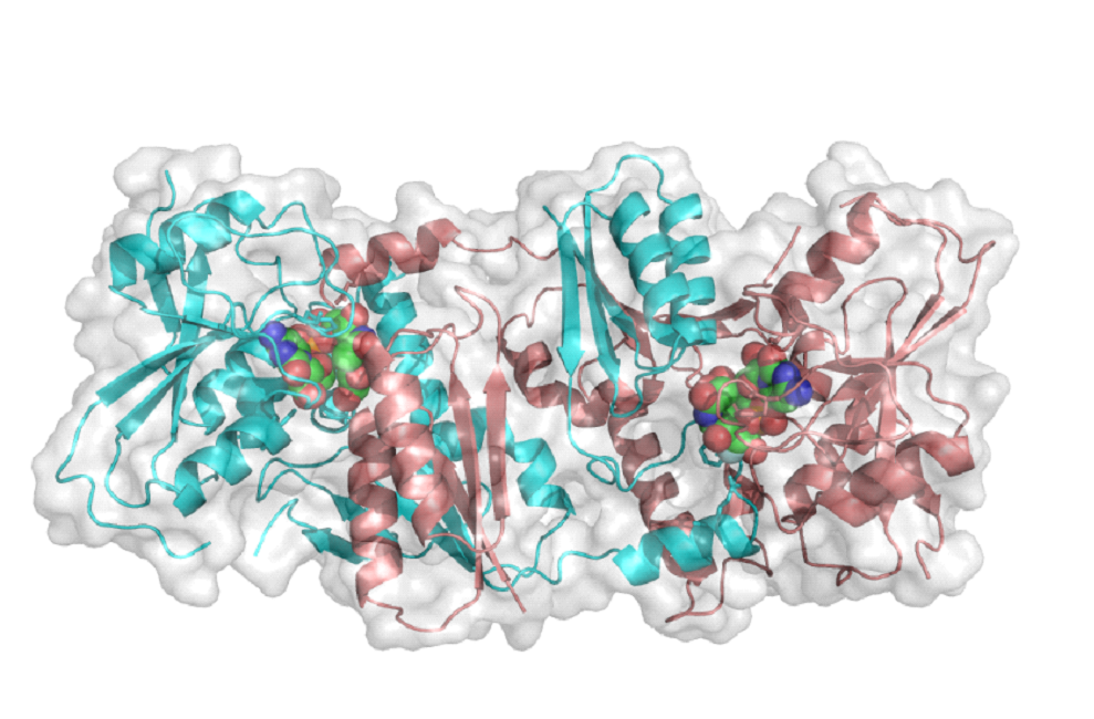PThe first GT-52 sialyltransferase structure